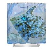 Nautical Beach And Fish #4 Shower Curtain