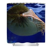 Nautilus Shower Curtain