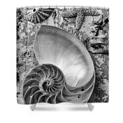 Nautilus Shell With Starfish Shower Curtain
