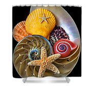 Nautilus With Sea Shells Shower Curtain