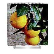 Naval Oranges On The Tree Shower Curtain