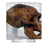 Neanderthal Skull Shower Curtain