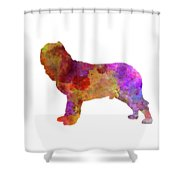 Napolitan Mastiff In Watercolor Shower Curtain