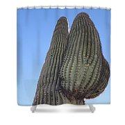 Wickenburg Saguaro  Shower Curtain