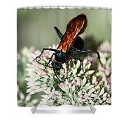Nectar Lover Shower Curtain