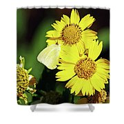 Nectar Seeker Shower Curtain