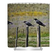 Neighborhood Watch Crows Shower Curtain