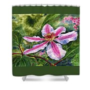 Nelly Moser Clematis Shower Curtain