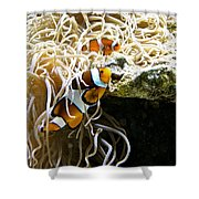 Nemo And Marlin Shower Curtain