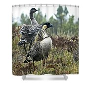 Nene Geese Shower Curtain