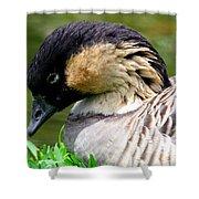 Nene Hawaii State Bird Shower Curtain