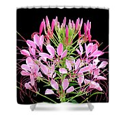 Neon Cleome Shower Curtain