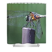 Neon Dragonfly Shower Curtain