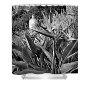Nepenthe Bird Of Paradise B And W Shower Curtain