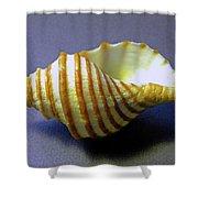 Neptune Whelk Seashell Shower Curtain