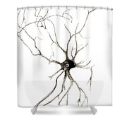Nerve Cell From Spinal Cord, Deiters Shower Curtain