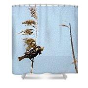 Nest Building Sparrow   Shower Curtain
