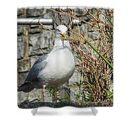 Nest Building Time Shower Curtain