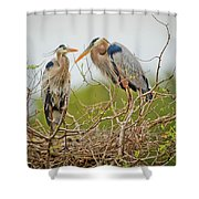 Nesting Blue's Shower Curtain