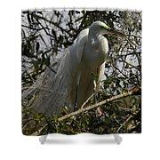 Nesting Egret Shower Curtain