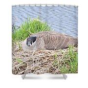 Nesting Goose Shower Curtain