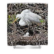 Nesting Great Egret With Chick Shower Curtain
