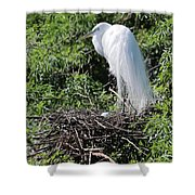 Nesting Great Egret With Egg Shower Curtain