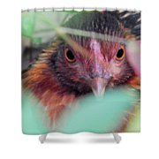 Nesting In The Wild Shower Curtain