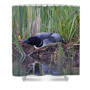 Nesting Loon Shower Curtain