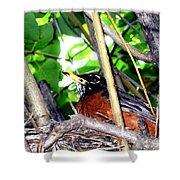 Nesting Robin Shower Curtain