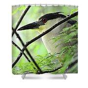 Nestled Night Heron Shower Curtain