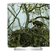 Nestlings Shower Curtain