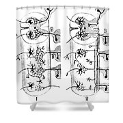 Neuroglia Cells Illustrated By Cajal Shower Curtain by Science Source