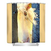 Hold On To Your Dream And Never Ever Give Up Shower Curtain by Hilde Widerberg