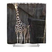 New Baby Giraffe Shower Curtain