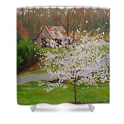 New Blossoms Old Barn Shower Curtain