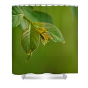 New Born Leaves Shower Curtain