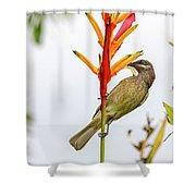New Caledonia Honeyeater Shower Curtain