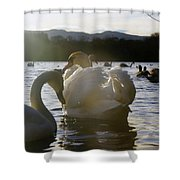 Duddingston Swan 11 Shower Curtain
