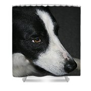 New Dog Friend Shower Curtain