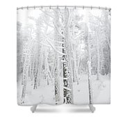 New England - Snow Covered Forest Shower Curtain