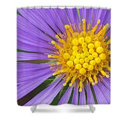 New England Aster Shower Curtain