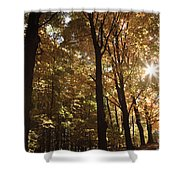 New England Autumn Forest Shower Curtain