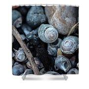 New England Beach Shells Shower Curtain