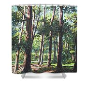 New Forest Trees With Shadows Shower Curtain