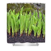New Green Spring Shoots Shower Curtain