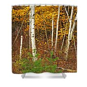 New Growth Old Leaves Shower Curtain