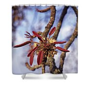 New Growth On A Shea Tree.  A Flower Shower Curtain