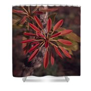 New Growth On A Shea Tree Shower Curtain