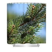 New Growth Pinecone At Chicago Botanical Gardens Shower Curtain